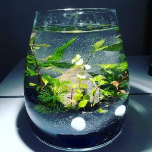 cadou iubita kit de crestere a plantelor